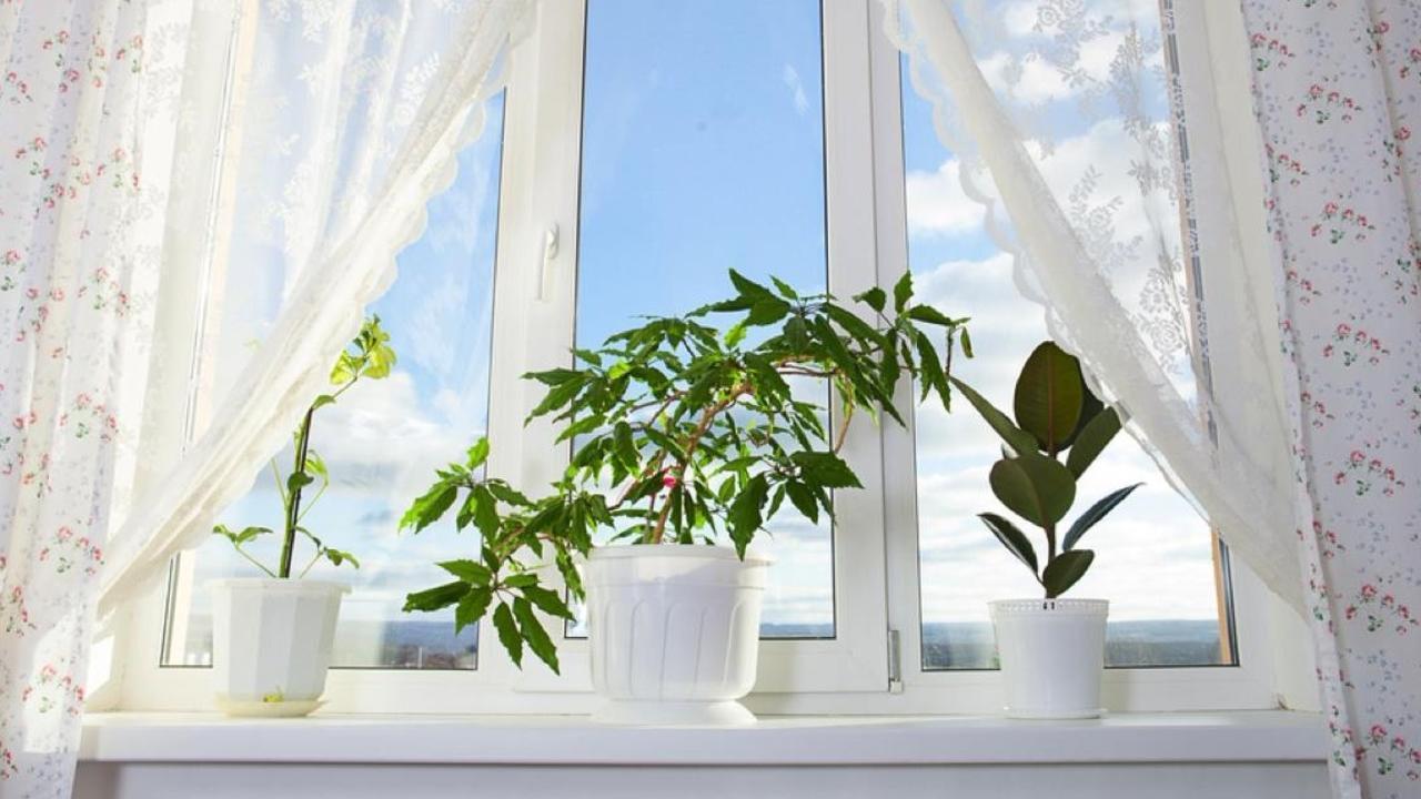 home decor plants