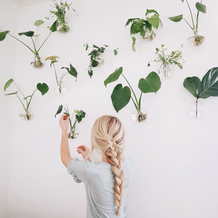 Plant Propagation Wall
